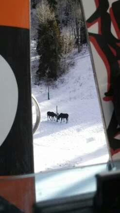 moose on the slopes but I hope more opens up for my next trip up to Snowbasin