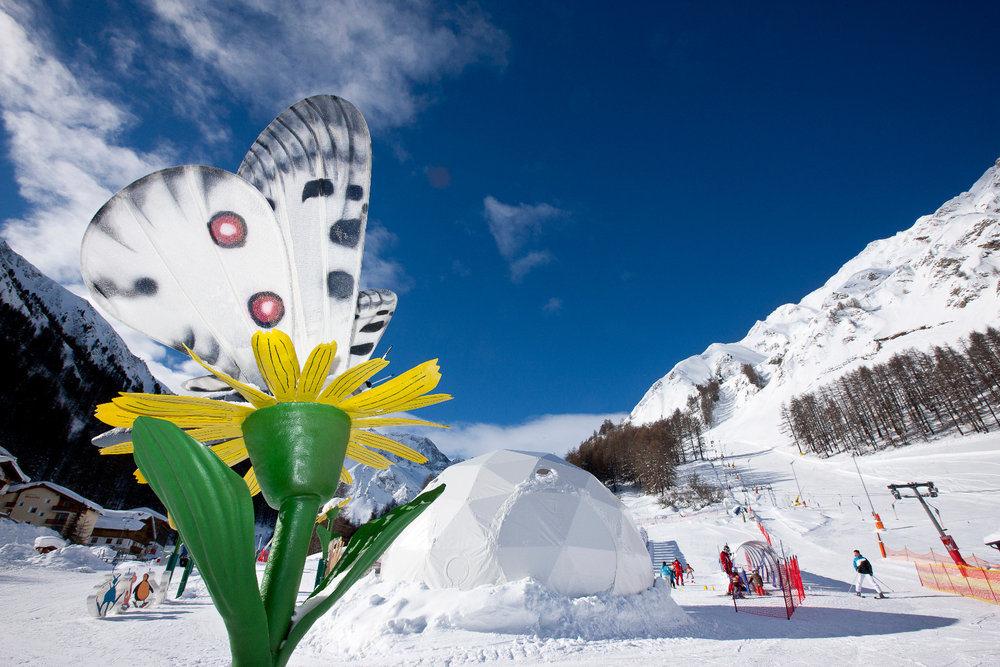 Winterblumen Traum - © Andrea Badrutt