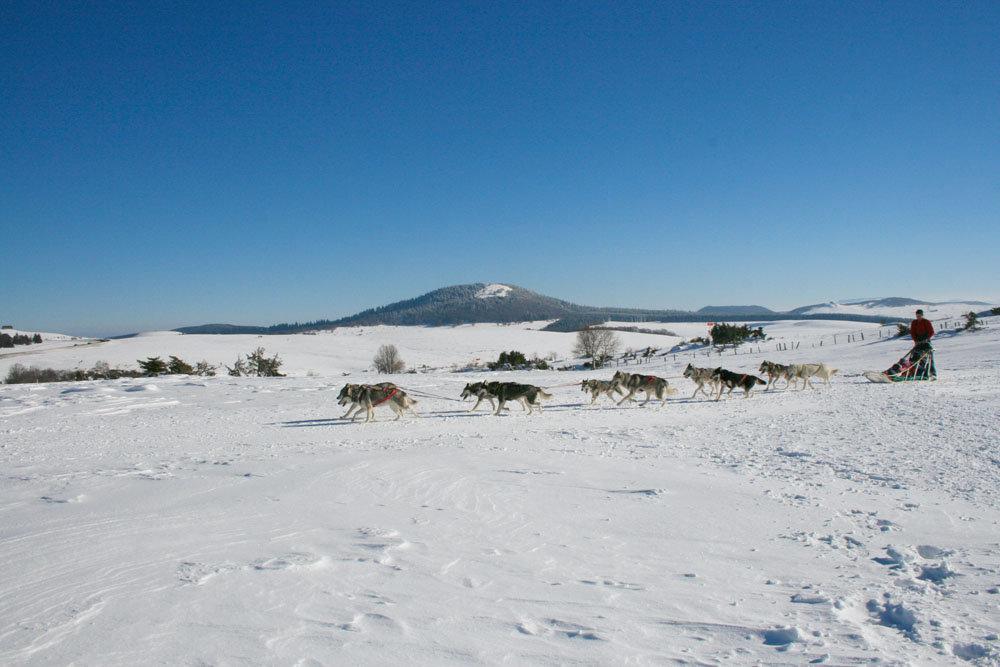 Balade en chiens de traineaux sur le plateau du Mont Dore - © Office de Tourisme Massif du Sancy