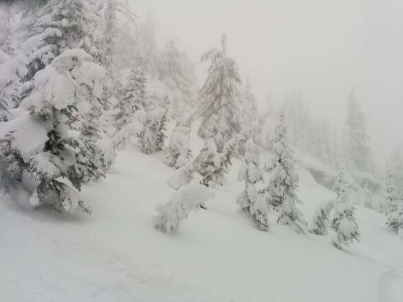 Epic powder today. Unexpected, but much appreciated. Still some exposed obstacles.