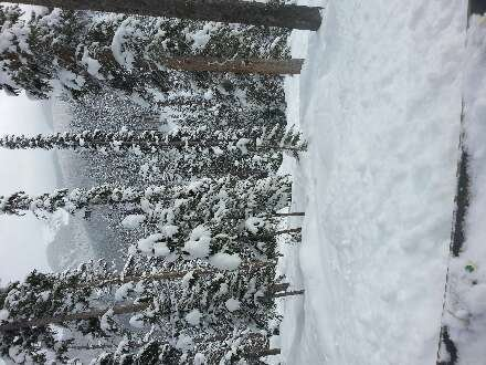 great snow, snowing on WP side of berthoud all day. trees at mary jane