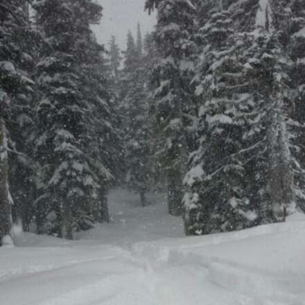 Enchanted forest...lift lines are crazy today but too much snow!
