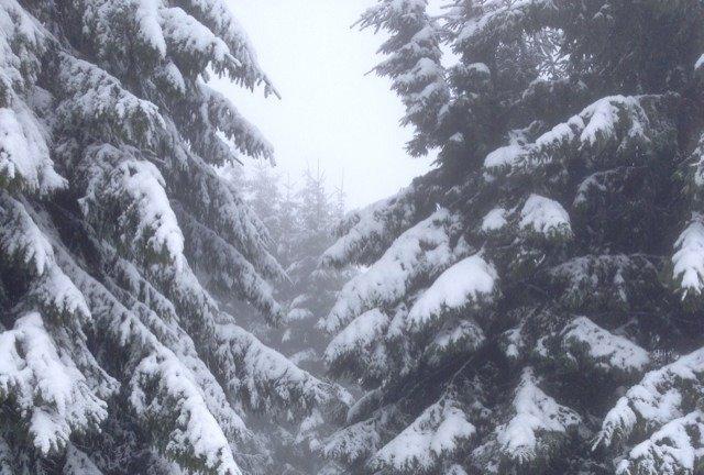 War nur Doppel-Lift geöffnet am 2.2.14, anfangs gut, stellenweise schneefreie flecken, zum Spaß haben in der Nähe richtig gut. Für Berg und Ski grenzwertig, da nachmittags angetaut.