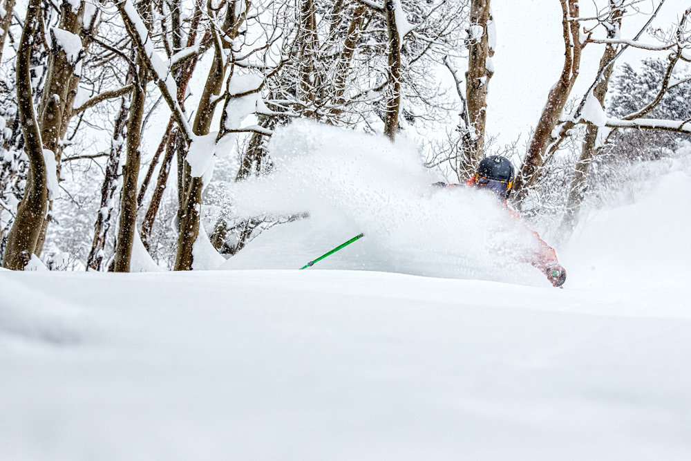 Grazing through the trees to find the deepest powder at Aspen. - © Liam Doran
