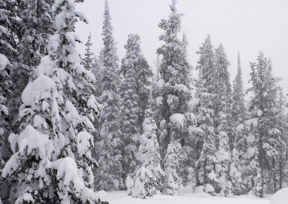 Val Gardena, Neve fresca 14 Gen 2014