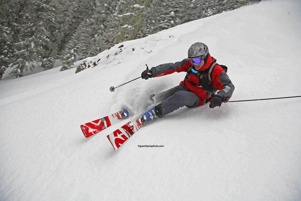 Off-piste skier through fir trees