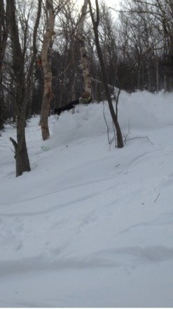 "yesterday was bombazzdank, white room all day. 15""+ of sugar in the bush supplies hoopin n hollerin from all the chowdah hounds"