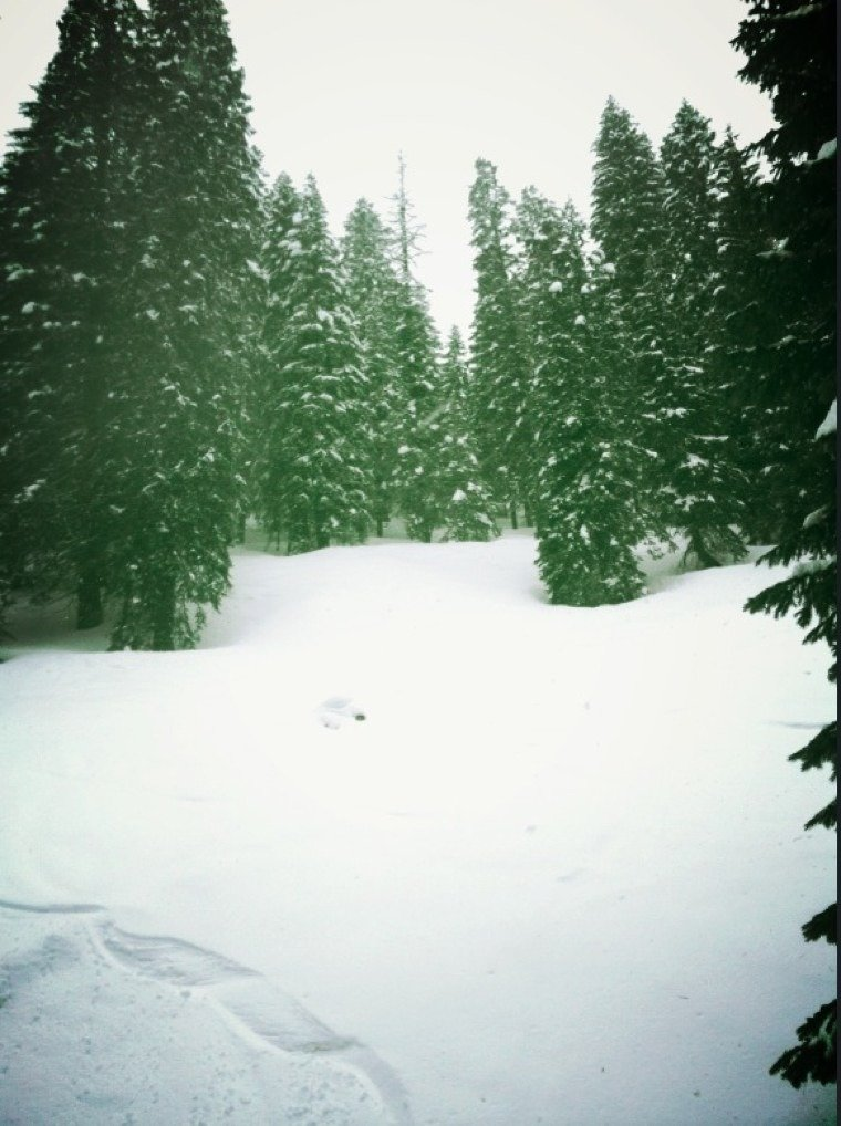 sweet powder in trees.  nice groomers. snow a bit heavy, soft on lower fourth of mountain...but a super fun day. BASH is Sunday!!