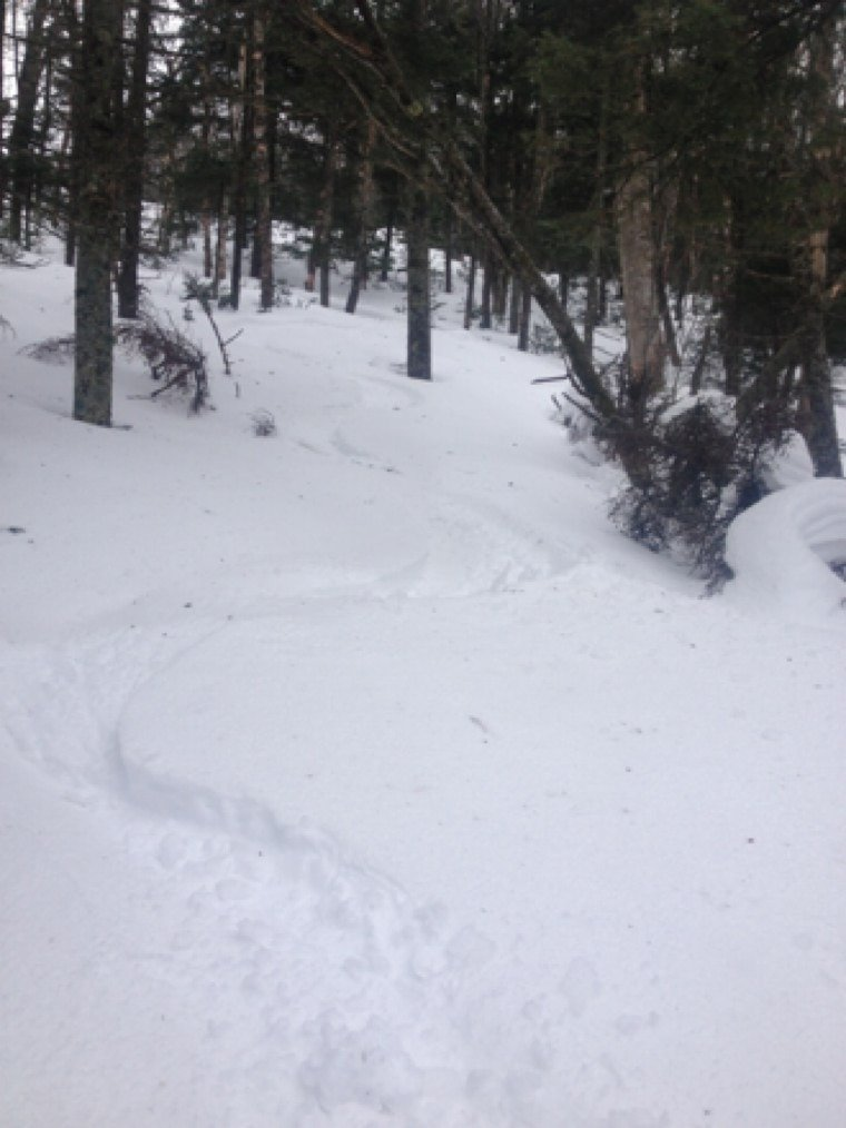 Inch skied like twenty ,fast zippy woods all day !!  Not cold but it rained on and off lightly all day crust up top is thick. not many out .this week corn will be ripe ,good week to spring ski in vt