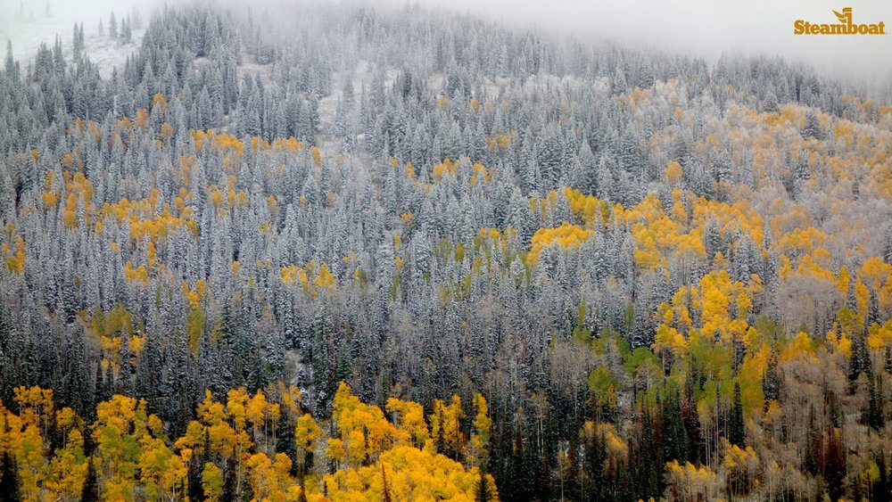 Steamboat's first storm prepping those glorious glades for skiing there soon. - © Steamboat Ski Resort