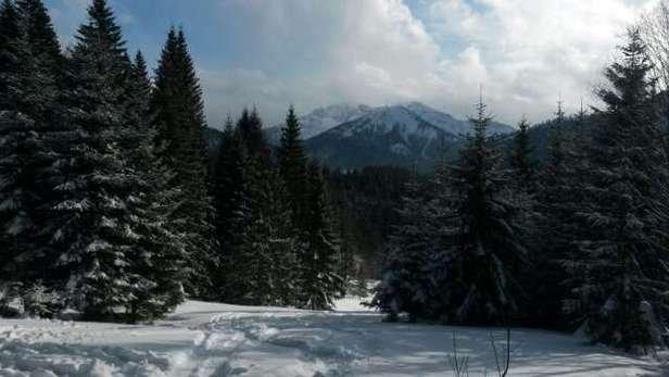 Hammer Tag mittags Schneetreiben danach leicht bewölkt Tiefschnee schon ziemlich zerfahren muss man suchen