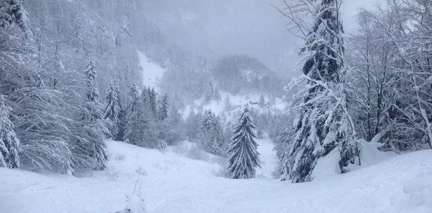 Samedi 31 janvier quasi 80cm de neige fraîche!!