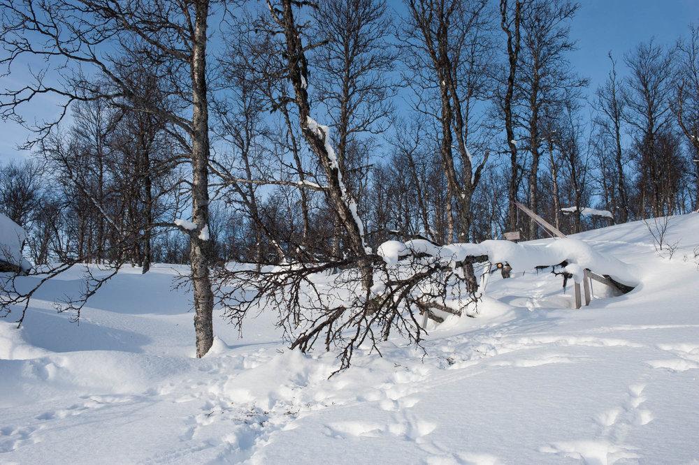Siden det er mye dansker i skianlegget er mye av skogen fortsatt urørt. - © Eirik Aspaas