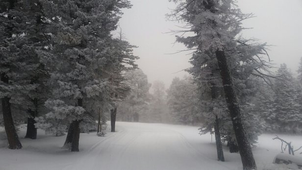 Got 4 new inches of beautiful powder! Can't wait to ride tomorrow!