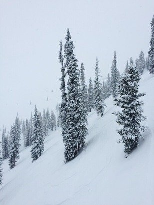 Kicking Horse - Decent Pow up top although raining hard at the bottom and no snow to ride. Good powder but very low visibility. - © Thomas