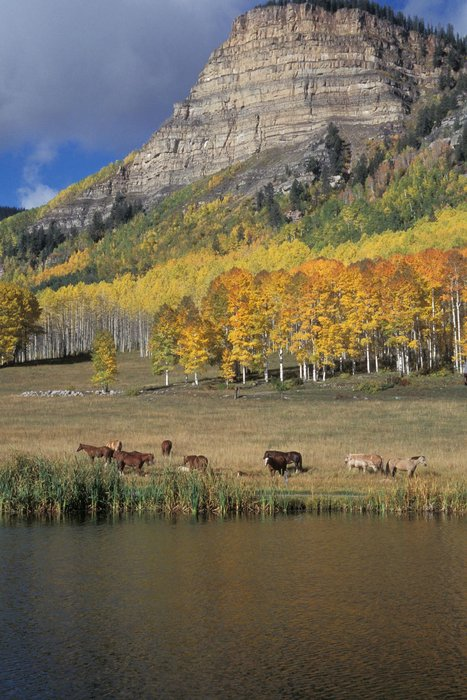 Fall colors in Durango.
