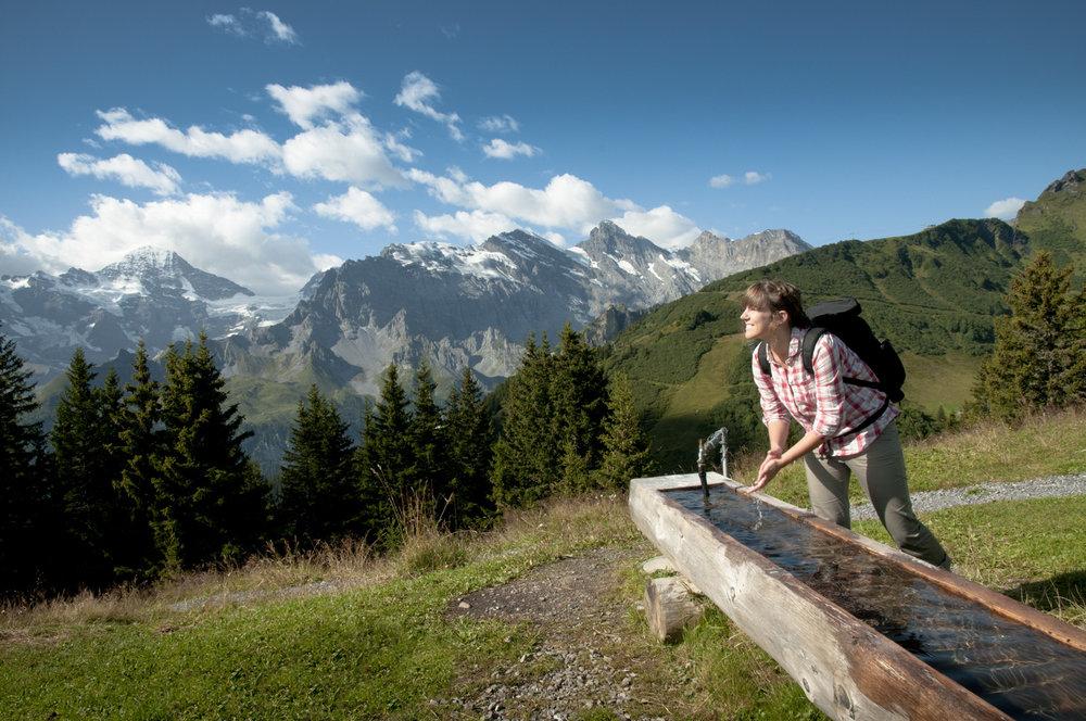 Wandern bei Mürren - © Jungfrau Region | Mattias Nutt