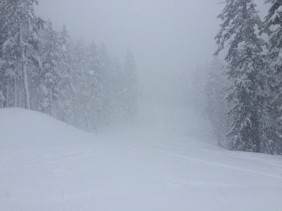 Mt. Bachelor - Killer powder day, everything untracked - ©Dr Fun
