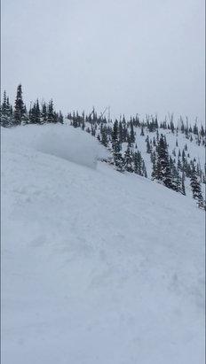 Castle Mountain - Epic powder day today.  - © Darbie