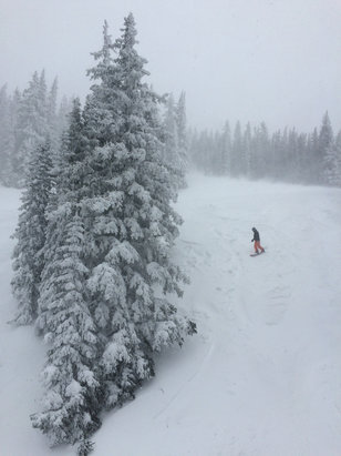 Ski Santa Fe - Powder in the trees and in the runs. Great conditions.  - © moot