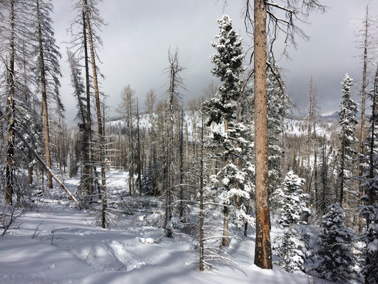 "Pajarito Mountain Ski Area - Definitely more than 4"" - © [! skireport_default_author ]"