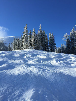 Nakiska Ski Area - A little powder in the glades and a blue bird day  - © K2 Sager