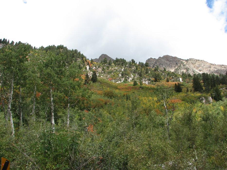 Fall colors in Alta, UT.