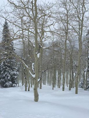 Deer Valley Resort - Empty powder day... - ©Michael's iPhone