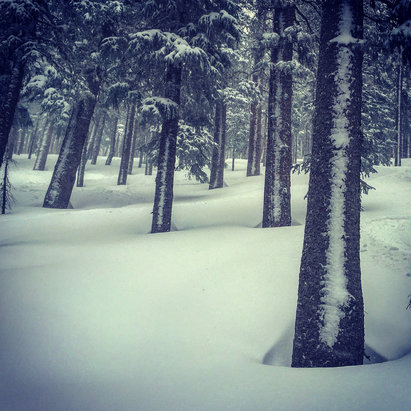 Ski Santa Fe - El Niño is back!!! Amazing conditions, get it while you can! - © SnowShark