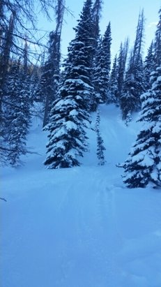 Wolf Creek Ski Area - Perfect conditions.   - © camerongarcia55