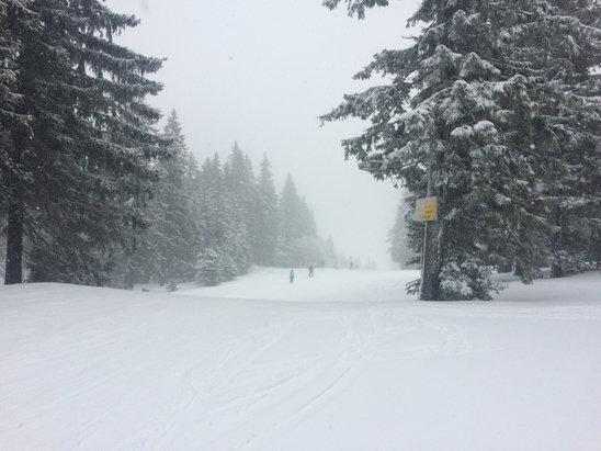Wintersportregion Murgtal/Bühlertal - De la très bonne neige !! Journée excellente !  - © Gazon