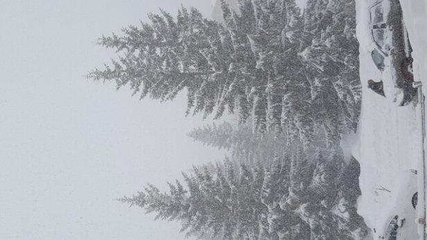 Val d'Allos - La Foux - Une journée complète de chutes de neige et ce n'est pas fini! - © Melou