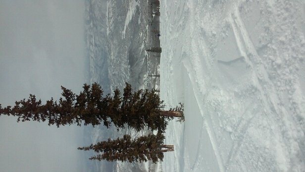 Aspen / Snowmass - epic pow - © skierguy8