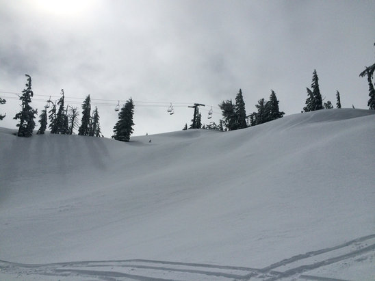 Mt. Bachelor - Really good Monday, untracked all over, 26 degrees, no one here, skyliner trees were silky soft! Runs under Rainbow untouched. - © dr fun
