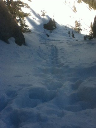 Mt. Norquay - Firsthand Ski Report - ©Anonymous