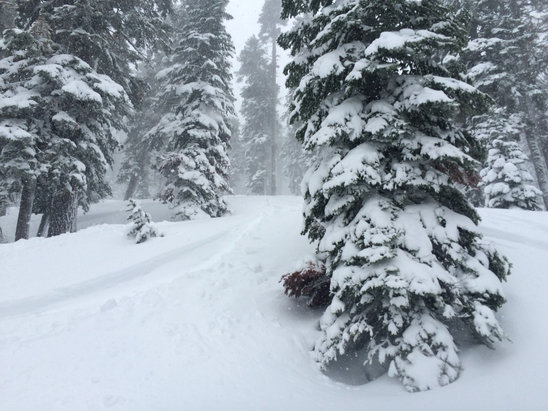 Homewood Mountain Resort - White room day Sunday. Going back today! - ©guy's iPhone