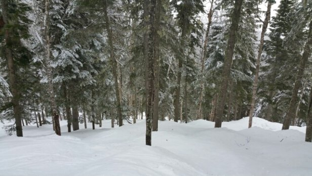 Le Massif - Two inches of heavy but beautiful spring snow.  Glades gorgeous.  - © rlevit