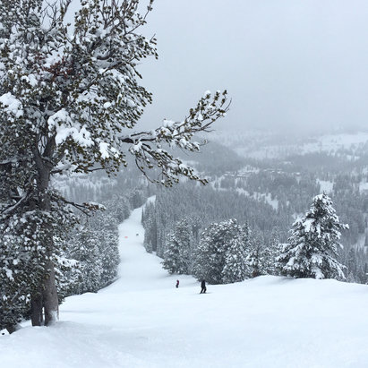 Grand Targhee Resort - Another great day here. Visibility not so good on top but still super fun and great snow. Picture is at the top of Dreamweaver.  - © Kraine