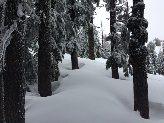 "Mt. Bachelor - 4/24 3"" new over carvable base made for surprisingly nice snow, trees were primo - © dr fun"