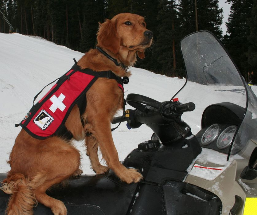 A rescue dog on a snowmobile at Copper, CO. - © Copper/CO