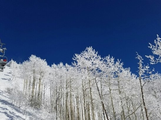 Steamboat - We just enjoyed an amazing two weeks in Steamboat. Even on crowded days there is powder to be found. Amazing mountain! - © fatovic@yahoo.com