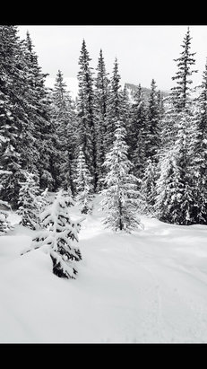 "Vail - Snow on Sunday was incredible, way more than 4"", great snow in the Basin if you know where to look.  - © Mark's iPhone"