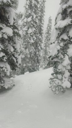 Fernie Alpine - powder.... powder everywhere.... bring your snorkel