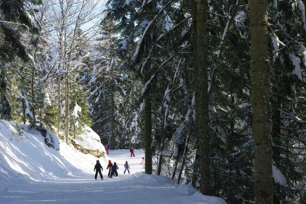 Ski ludique sur les pistes de Méaudre serpentant dans la forêt - © Station Autrans-Méaudre en Vercors