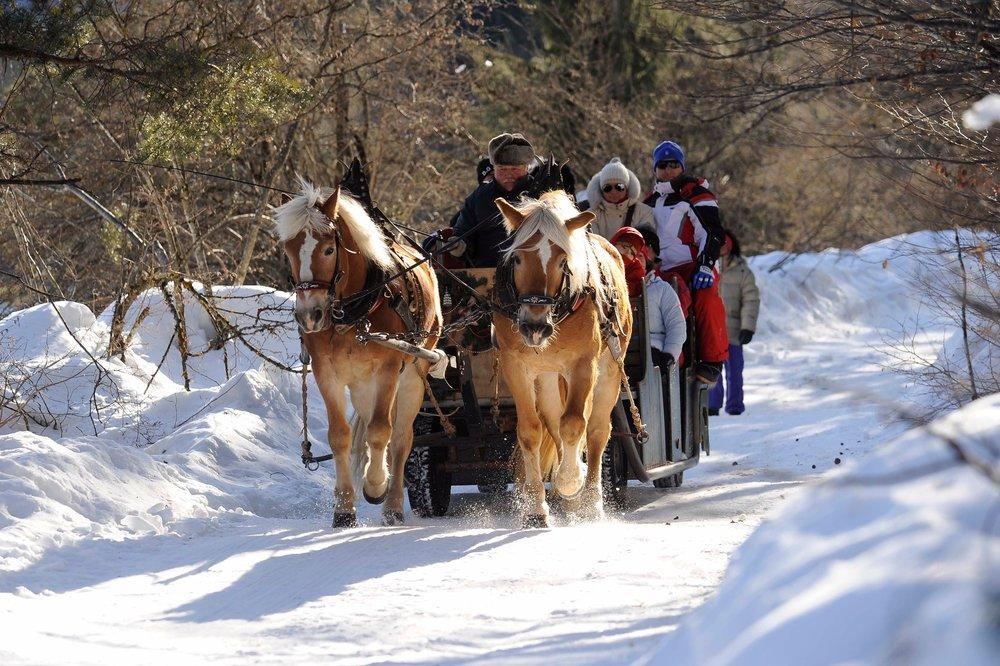 Escursione con la slitta trainata dai cavalli - Paganella (Trentino) - © Ph: Tonina per Visitdolomitipaganella.it