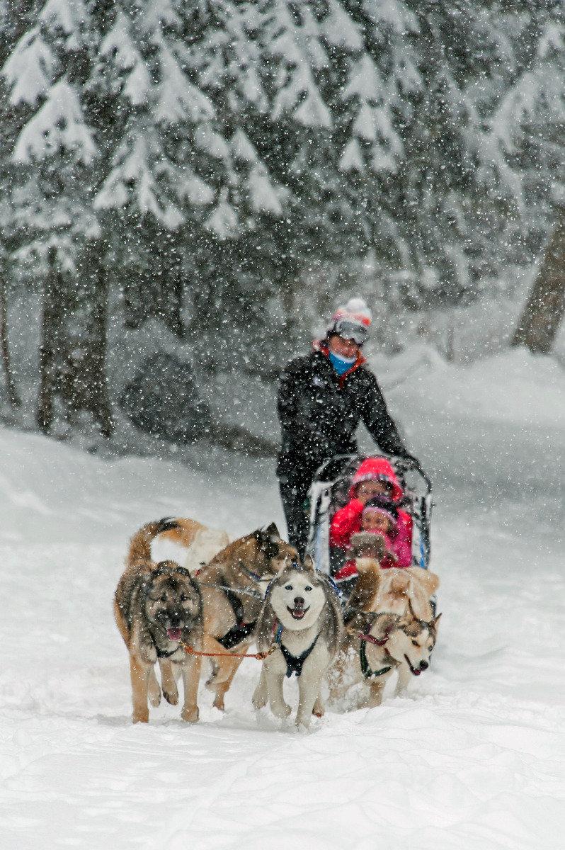 Découverte de l'activité chien de traineaux sur les sentiers enneigés de Passy Plaine JOux - © Eric Courcier / OT de Passy