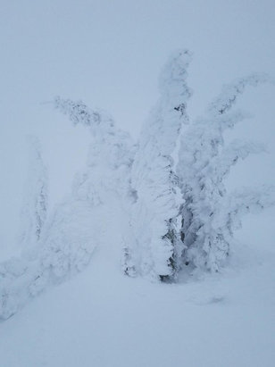 Whitefish Mountain Resort - So.Much.Snow.