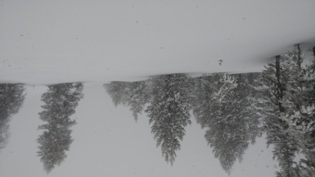 Vail - great powder day! They're starting to open up some of that back side - © anonymous