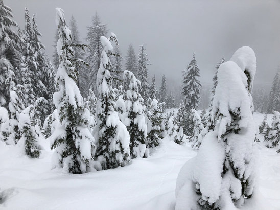 Lookout Pass Ski Area - It was a powder day! - © ski chick
