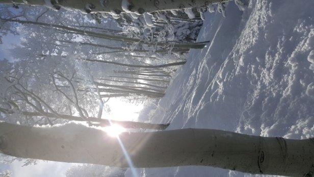 """Steamboat - 11"""" new, tree's ski like 16"""" 6 - © Mtnequipage"""